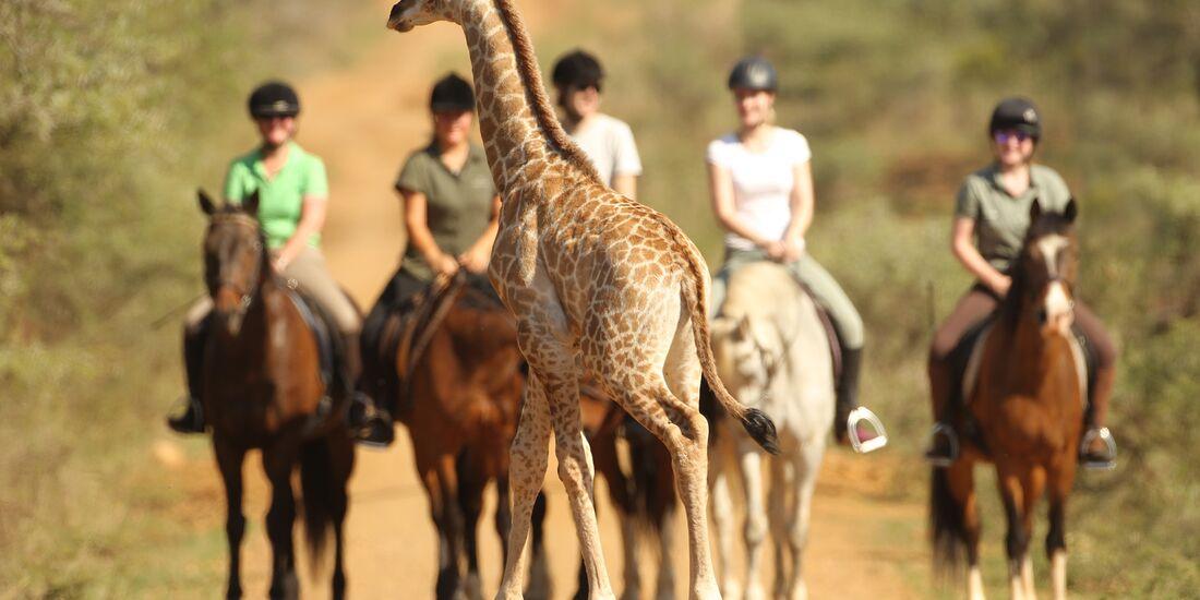 CAV Pegasus Afrika Giraffen