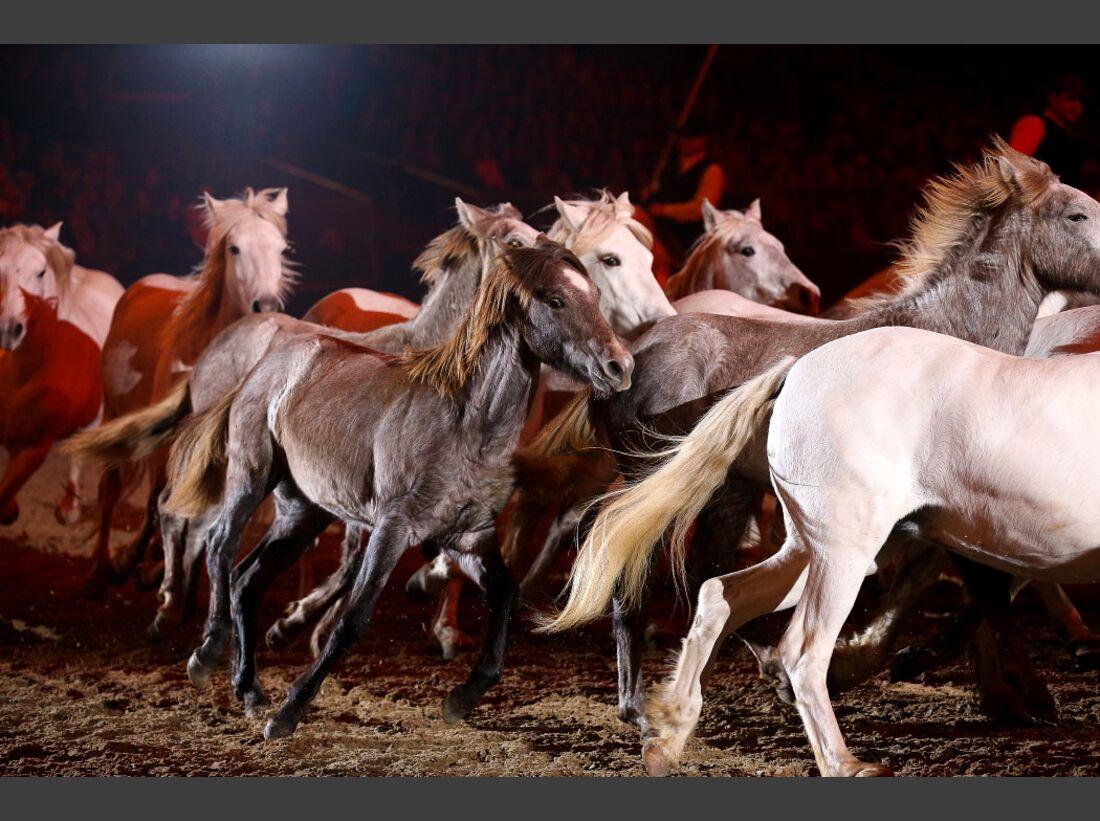 CAV Pferd und Jagd 23
