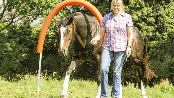 CAV Pferde-Agility  Aufmacher Artikel