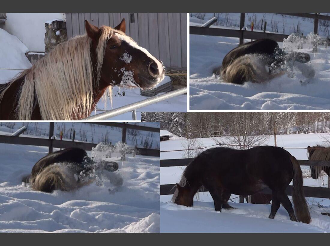CAV Pferde Schnee Winter 2015