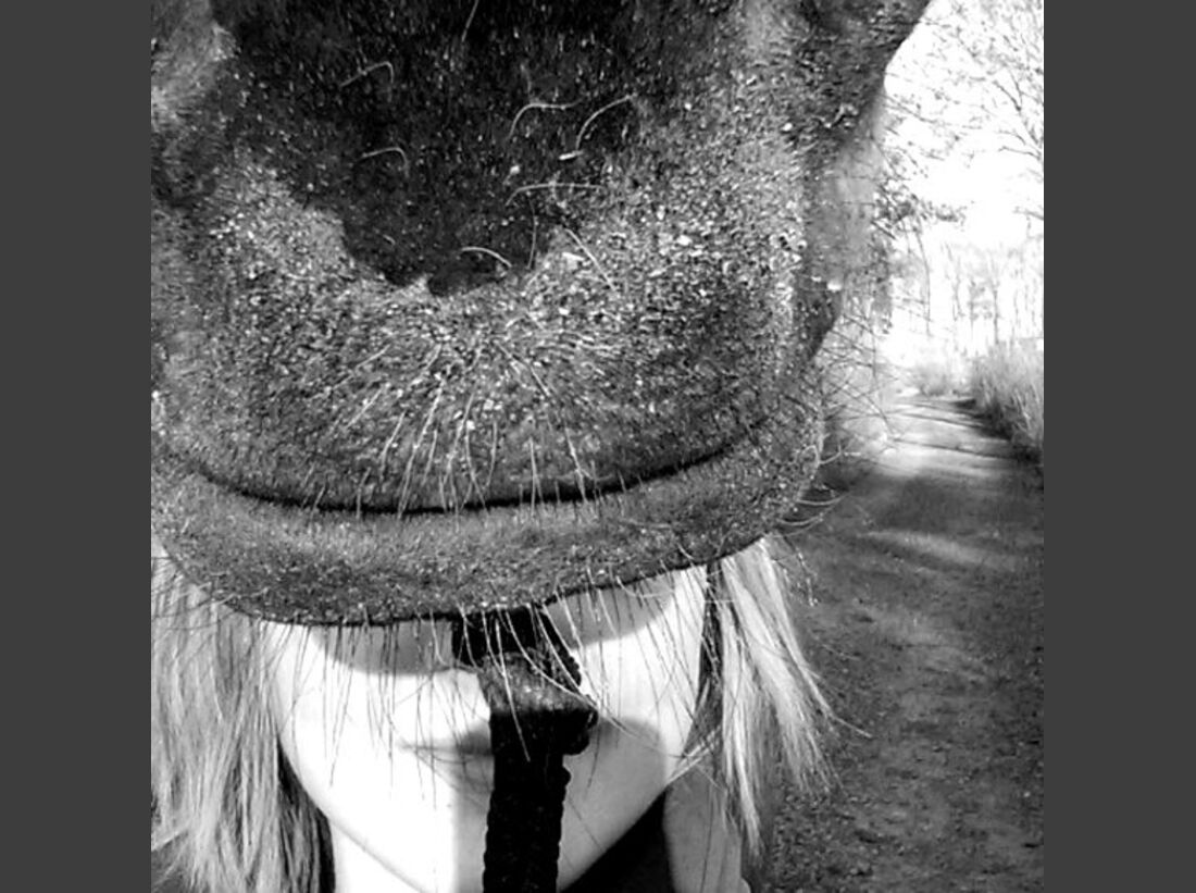 CAV-Pferde-Selfie-Leseraktion-2014-Hannah-Koehler (jpg)