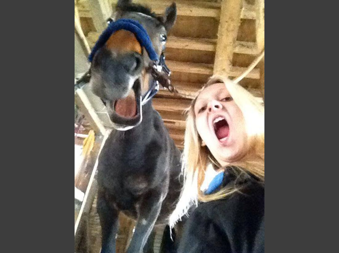 CAV-Pferde-Selfie-Leseraktion-2014-Jessica-Baier (jpg)