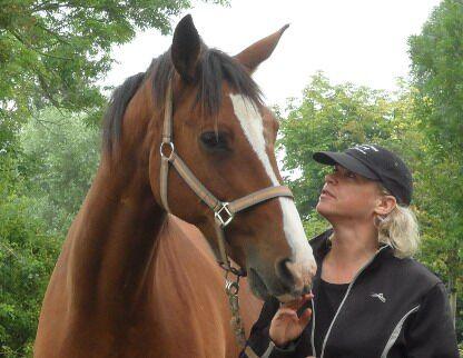 CAV Pferde Senioren 23-jähriger Trakehner Piero MS