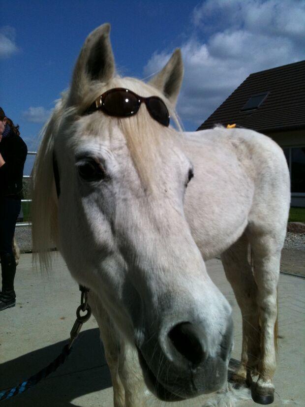 CAV Pferde Senioren Ponystute Venus 36 Jahre MS