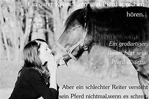 CAV Pferde Zitate Leserfotos 3