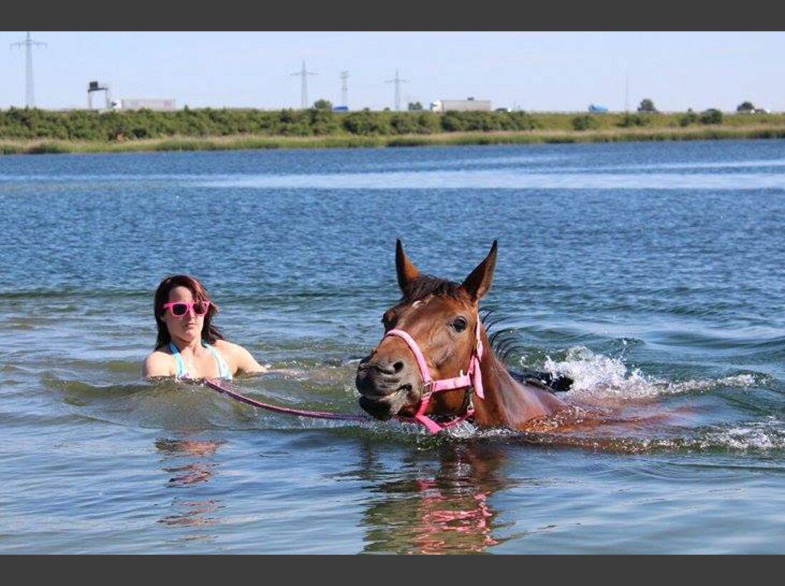 CAV-Pferde-beim-schwimmen-Desiree-Blume