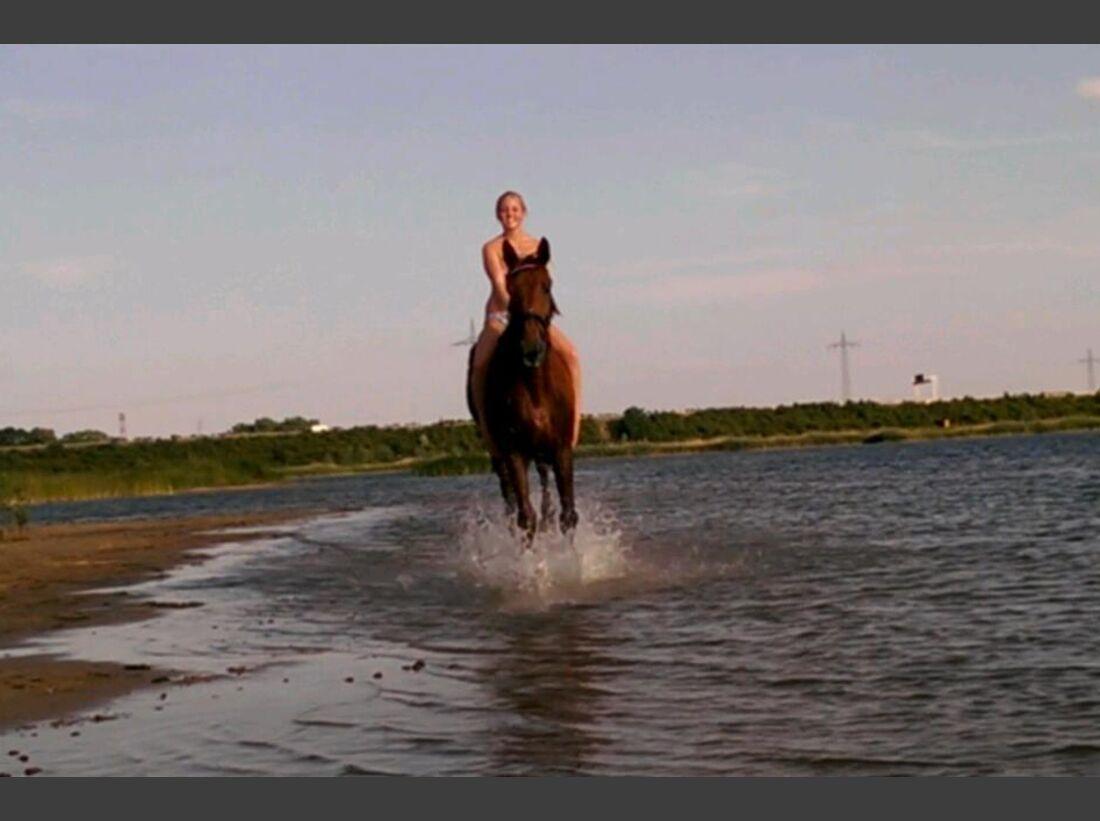 CAV-Pferde-beim-schwimmen-Tabea-Peters (jpg)