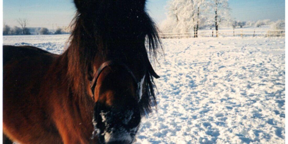 CAV Pferde im Schnee Winter 2012-10-30 Kim 8
