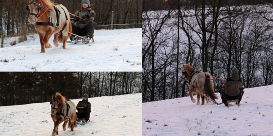 CAV Pferde im Schnee Winter - Marlon