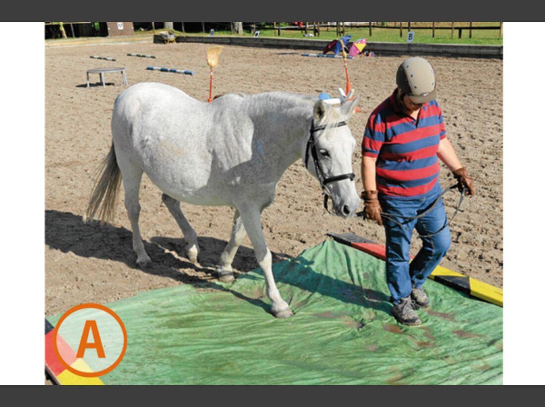 CAV Pferde kaufen Pferdekauf Junge Pferde A