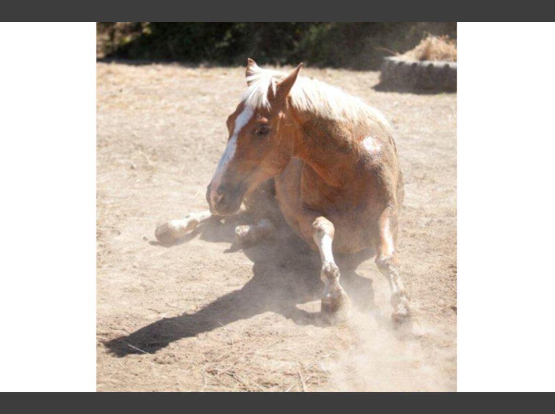 CAV Pferde wälzen 3