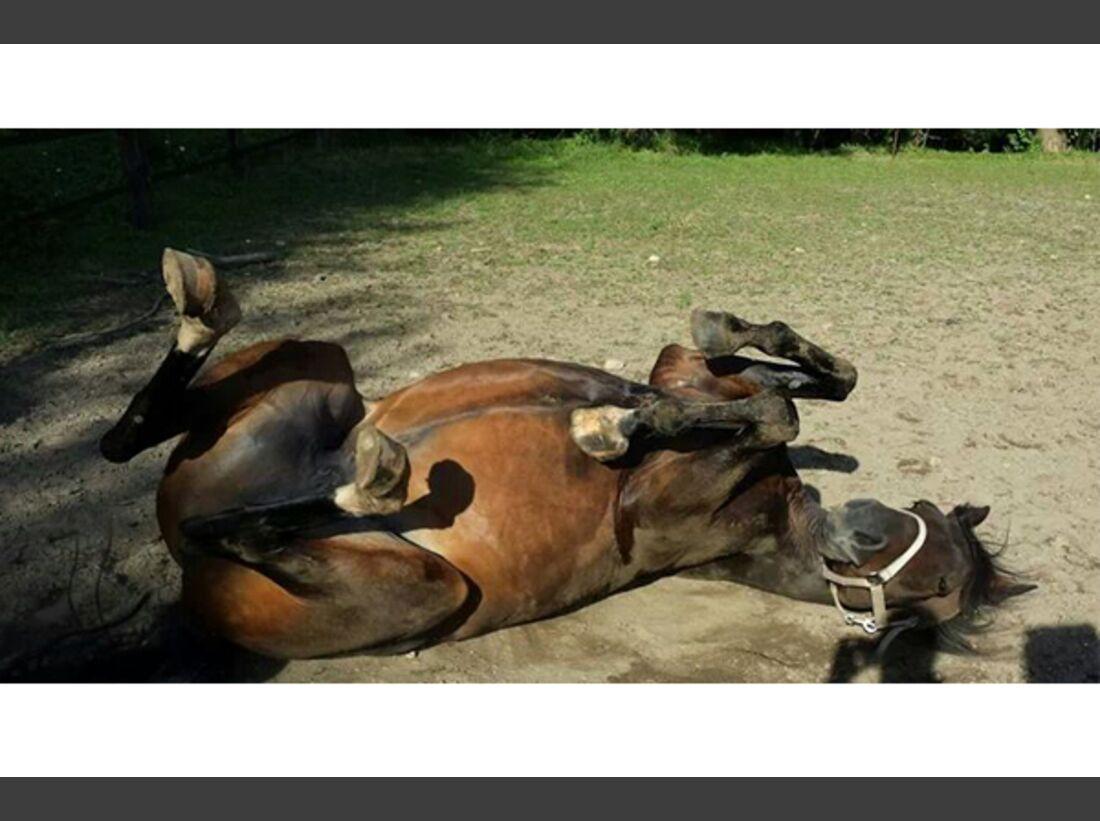 CAV Pferde wälzen Leserfotos 23