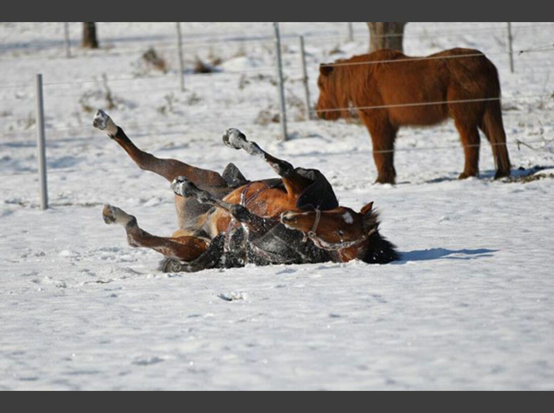 CAV Pferde wälzen Leserfotos 28
