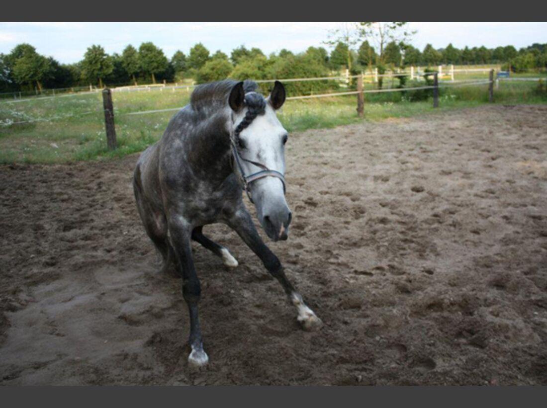 CAV Pferde wälzen Leserfotos 35