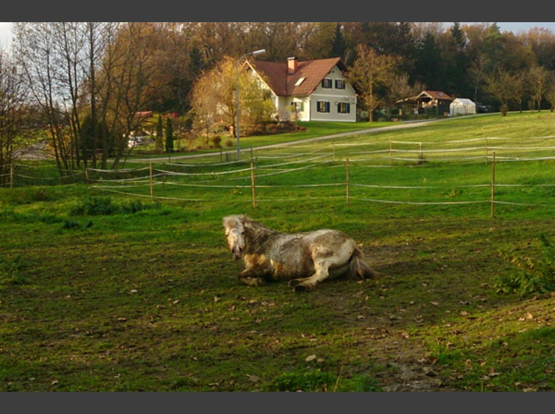 CAV Pferde wälzen Leserfotos 41