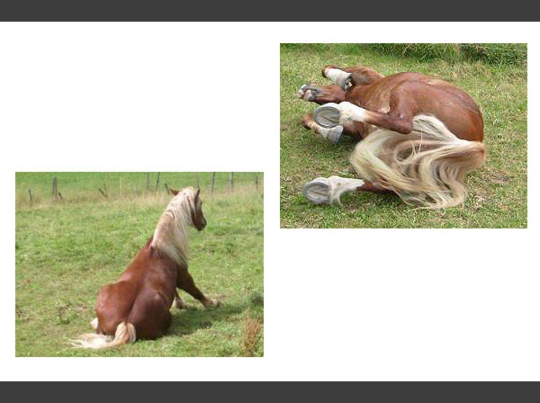CAV Pferde wälzen Leserfotos 42