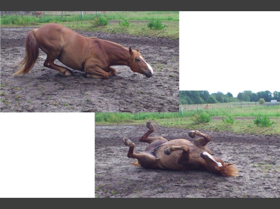 CAV Pferde wälzen Leserfotos 44