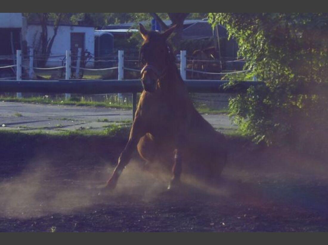 CAV Pferde wälzen Leserfotos 50