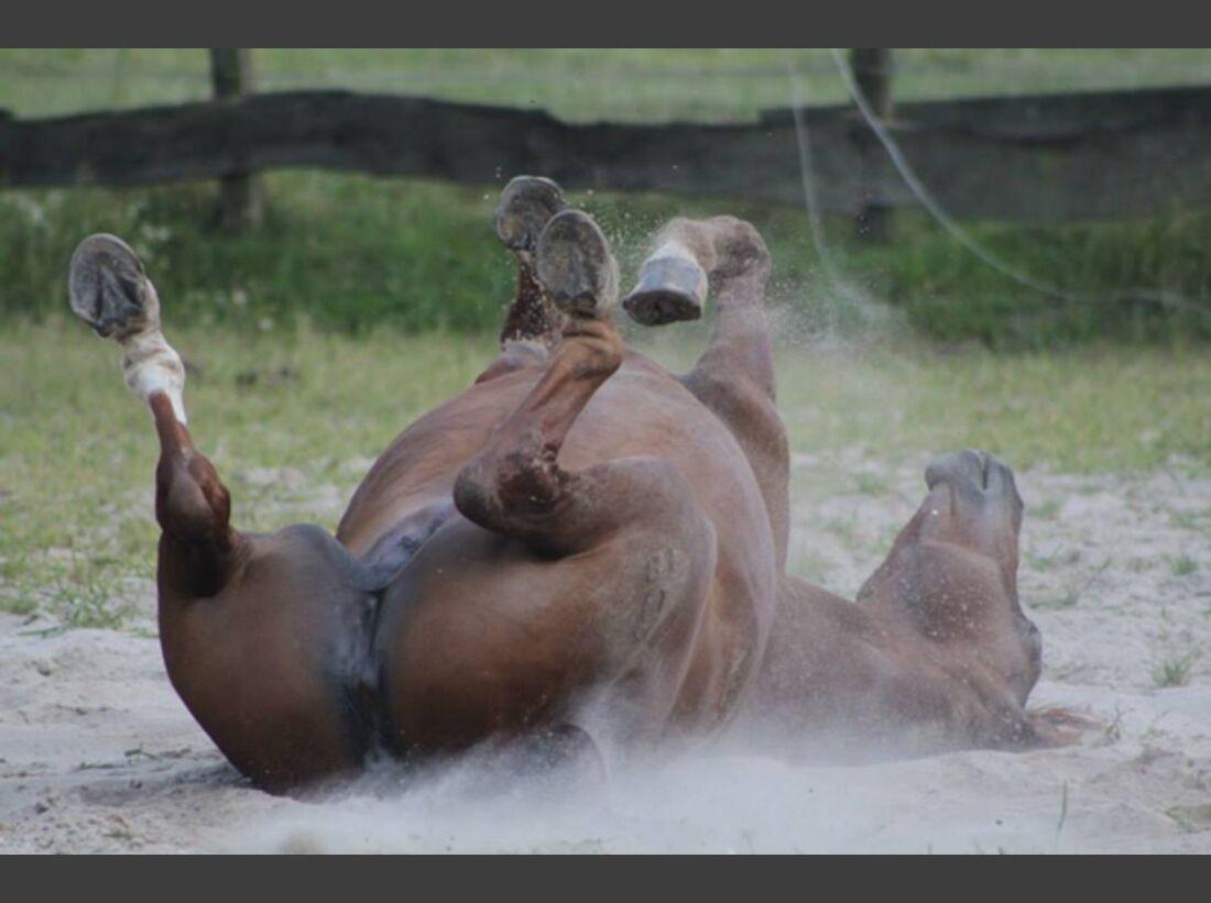 CAV Pferde wälzen Leserfotos 58