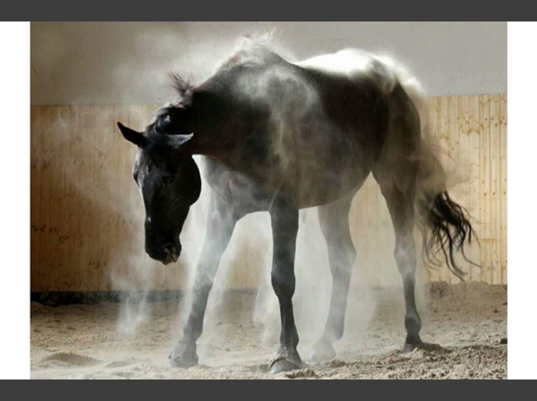 CAV Pferde wälzen Leserfotos 59