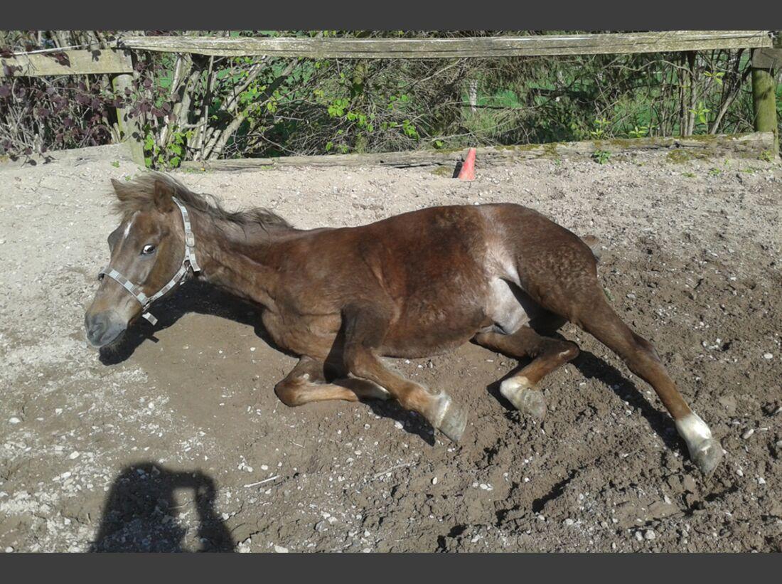 CAV Pferde wälzen Leserfotos Diana Ahlborn