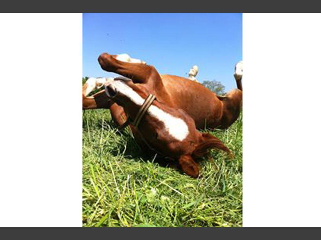 CAV Pferde wälzen Leserfotos Ilona Hahn