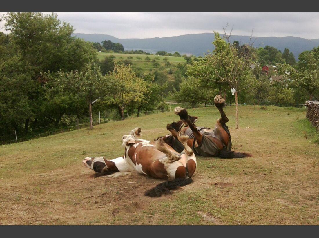 CAV Pferde wälzen Leserfotos Melanie Mischler