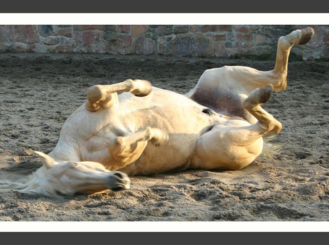 CAV-Pferde-wälzen-Leserfotos-Petra-Markwart