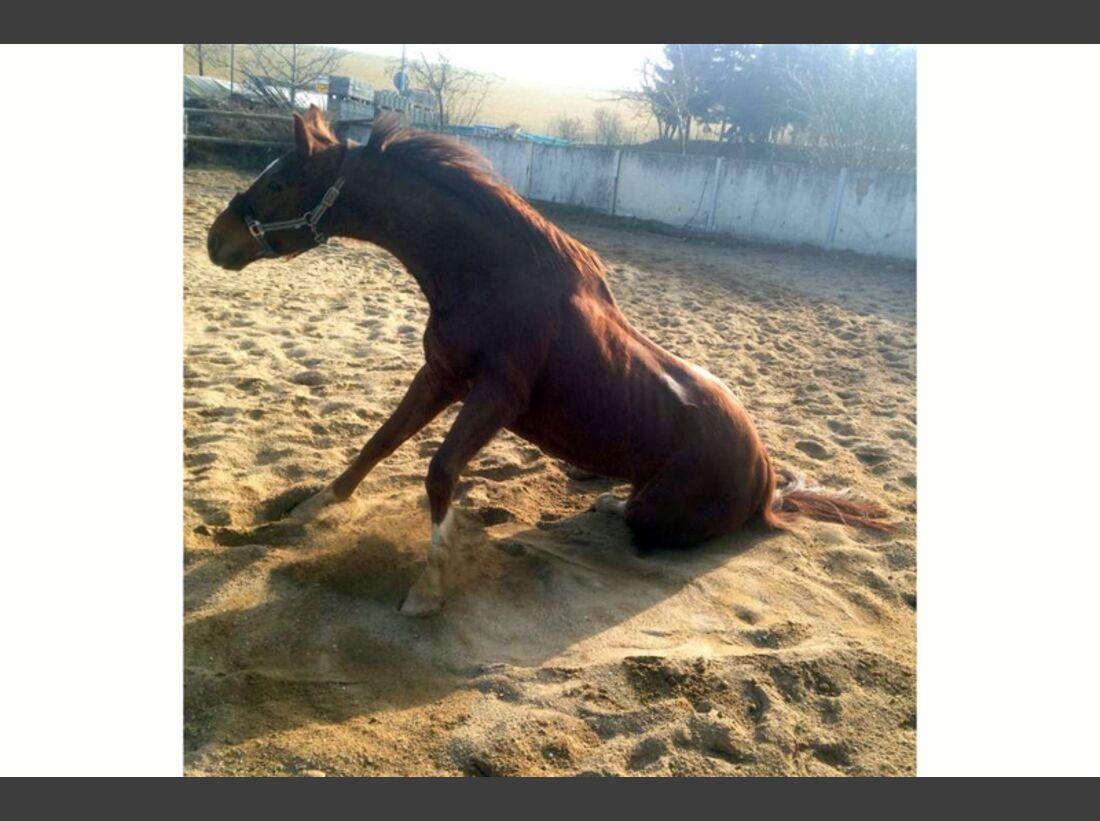 CAV-Pferde-wälzen-Leserfotos-Sabrina-Schuster