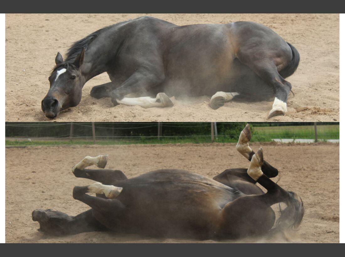 CAV Pferde wälzen Leserfotos Siobhan Blaß