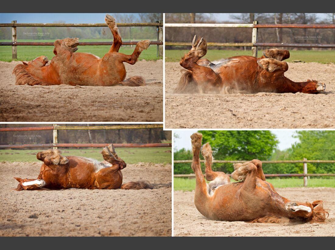 CAV Pferde wälzen Leserfotos Svenja Ache