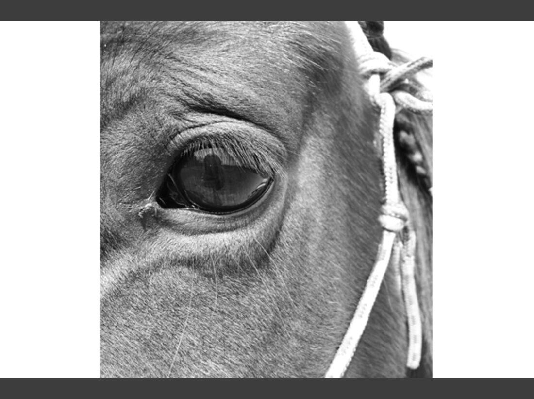 CAV Pferdeaugen 2