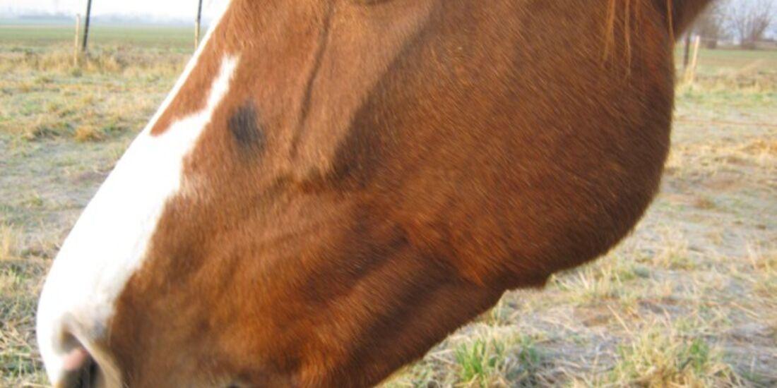 CAV Pferdeaugen Augen Araber MS_60