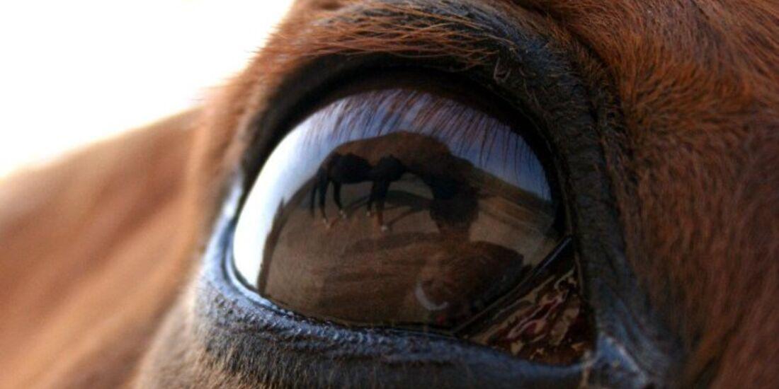 CAV Pferdeaugen Augen Block