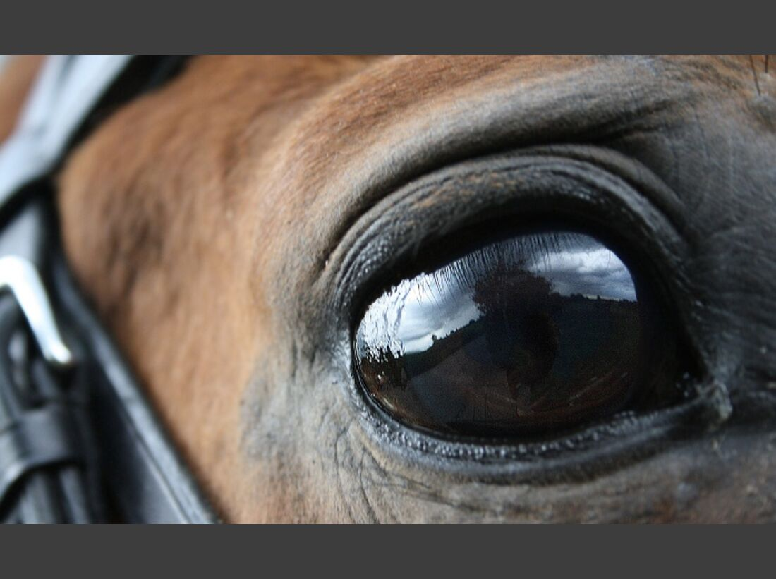 CAV Pferdeaugen Augen Hannoveraner MS_50