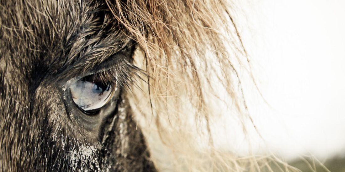 CAV Pferdeaugen Augen Isländer MS _07