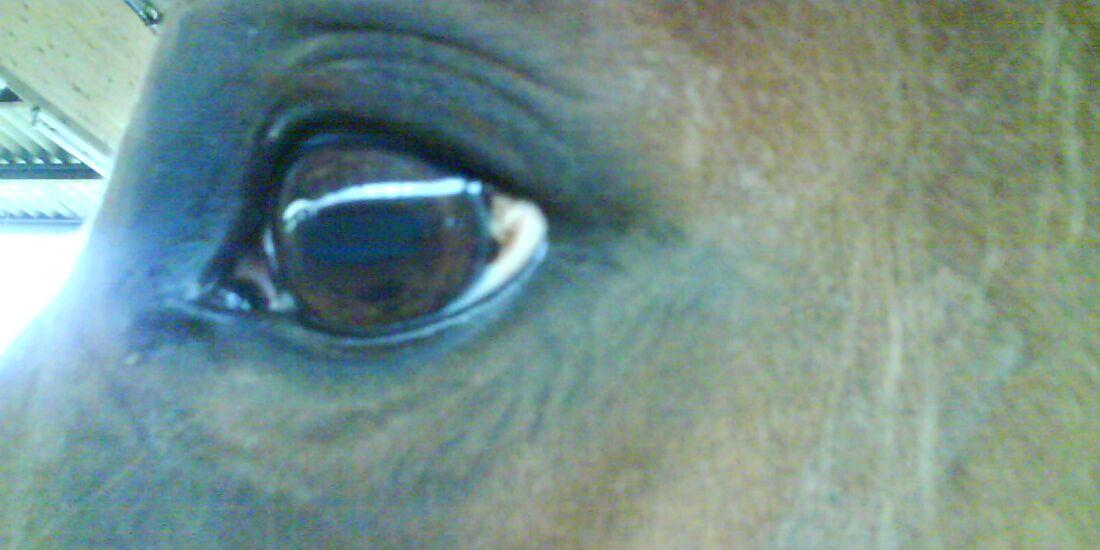 CAV Pferdeaugen Augen MS Leonie Schmidt