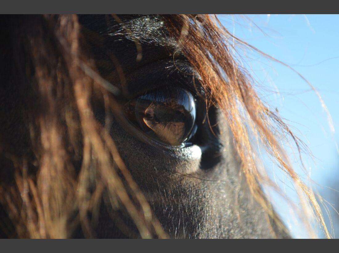 CAV Pferdeaugen Augen Pinto MS_53