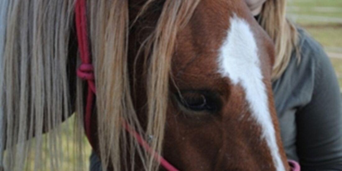 CAV Pferdeaugen Augen Pony MS_36