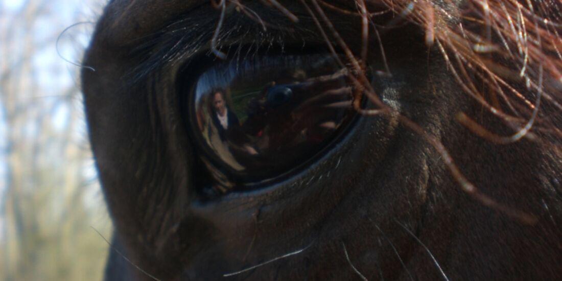 CAV Pferdeaugen Augen Warlander MS _22
