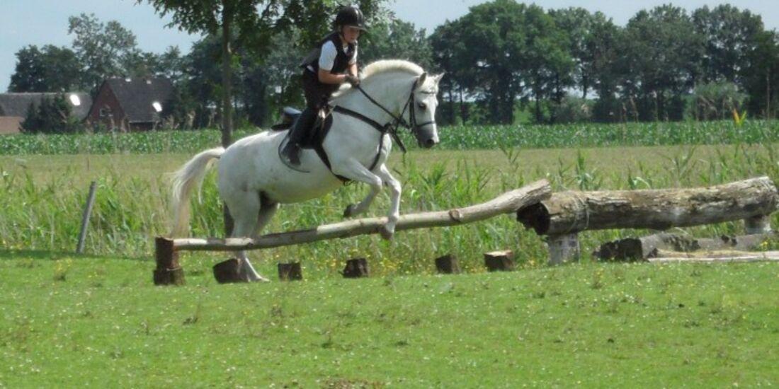 CAV Pferdeaugen Augen Welsh MS _24