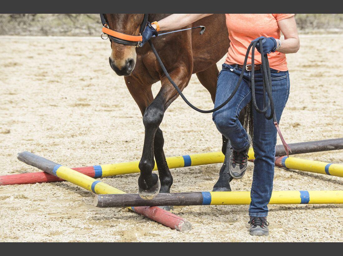CAV Pferdehänger Pferd verladen 2