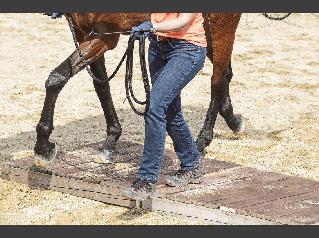 CAV Pferdehänger Pferd verladen 5