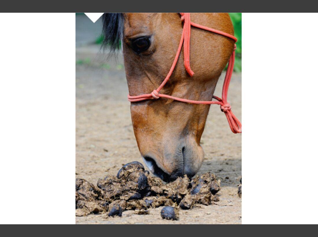 CAV Pferdekenner Knut Krüger Training Verhalten 11
