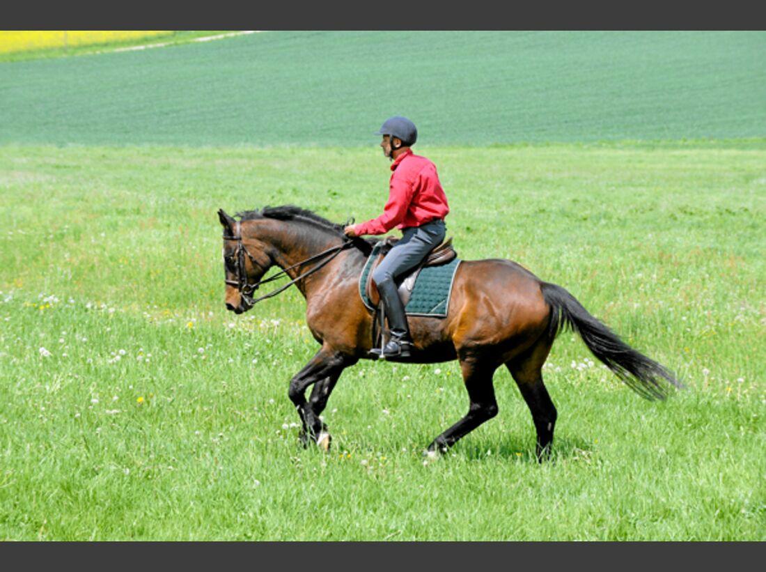 CAV Pferdekenner Knut Krüger Training Verhalten 14