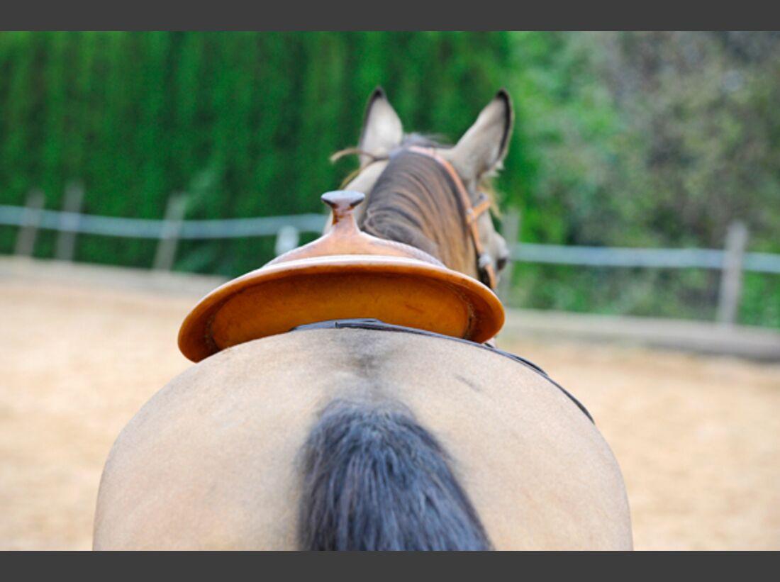 CAV Pferdekenner Knut Krüger Training Verhalten 9