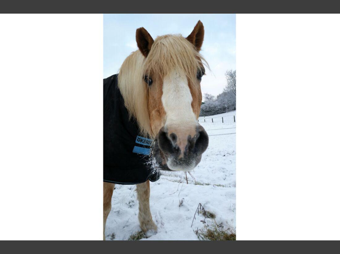 CAV Pferdenasen Anja Hammer