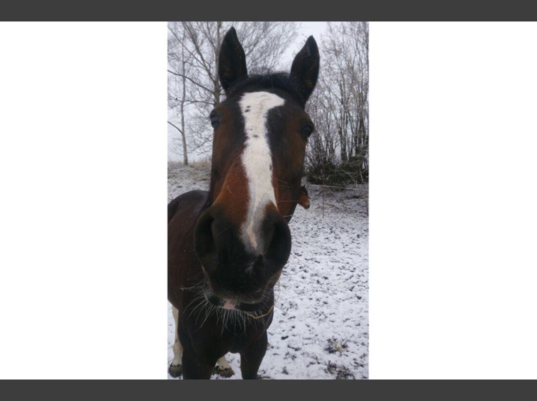 CAV Pferdenasen - Diane Haase