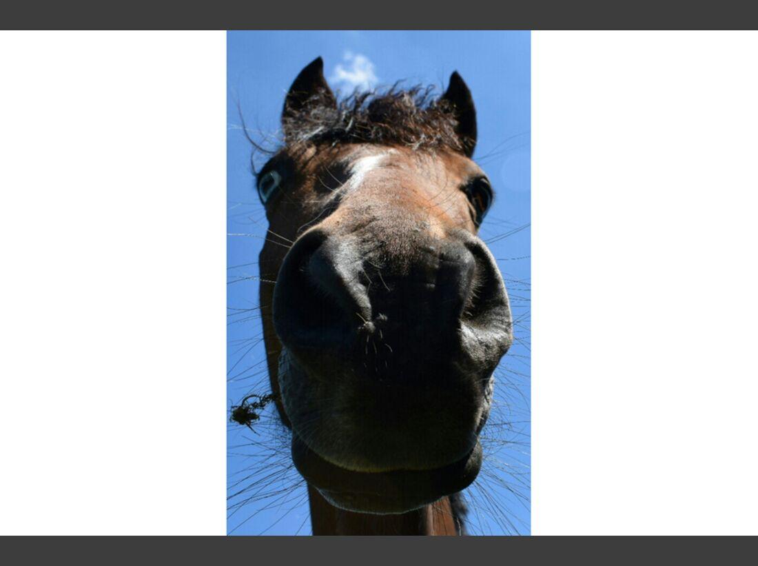CAV Pferdenasen Kathrin Harms-Hirche