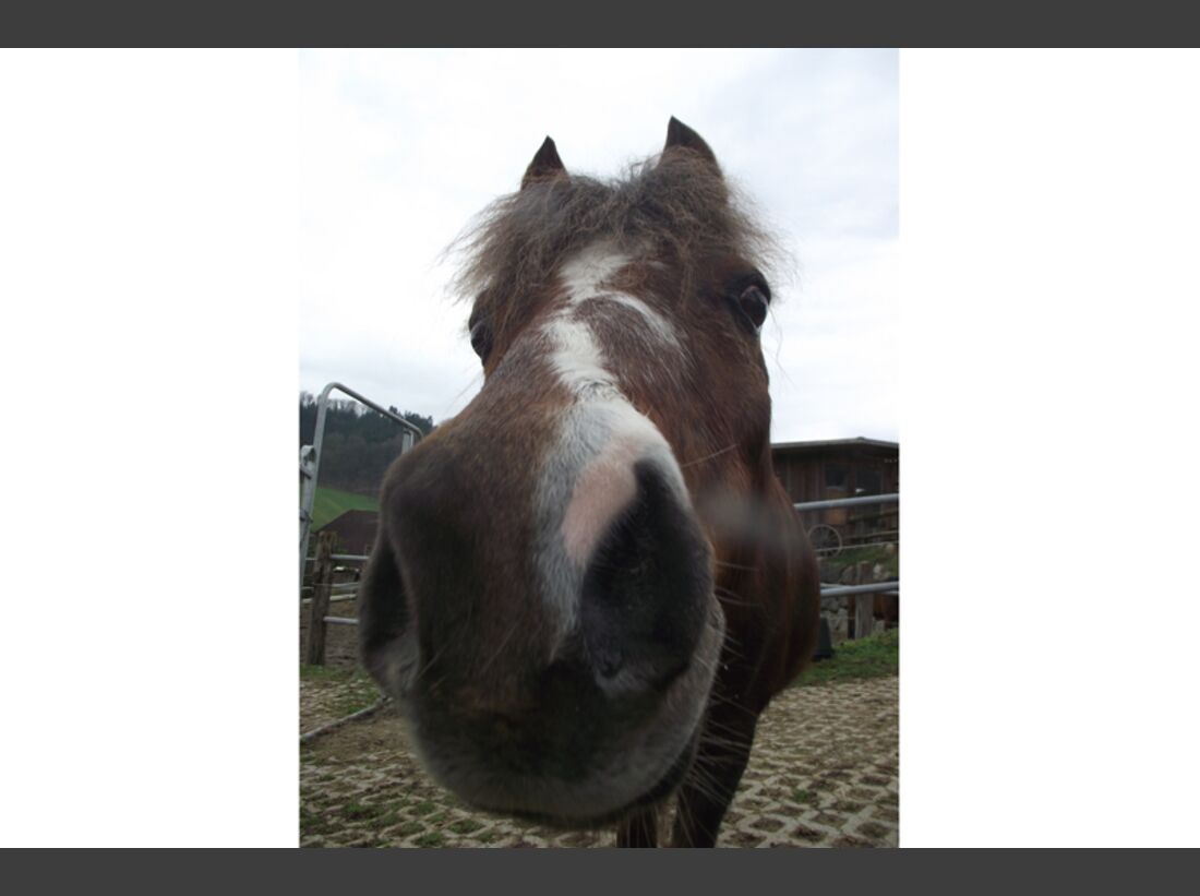 CAV Pferdenasen Nüstern Leserfotos Sarah Rösch